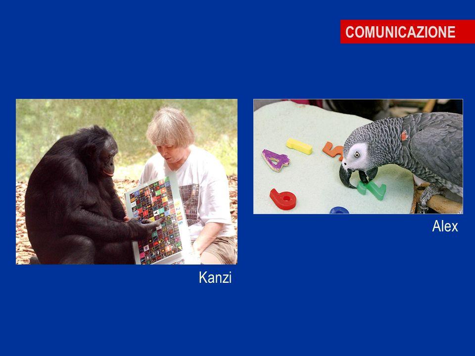 COMUNICAZIONE Kanzi Alex