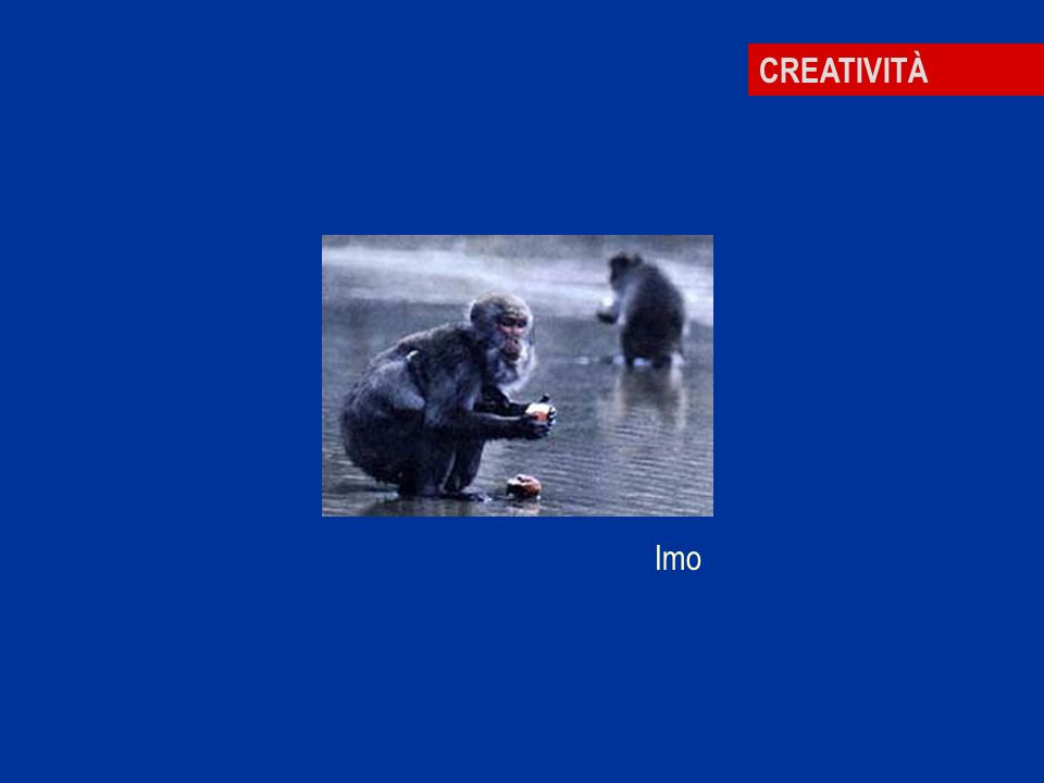 CREATIVITÀ Imo