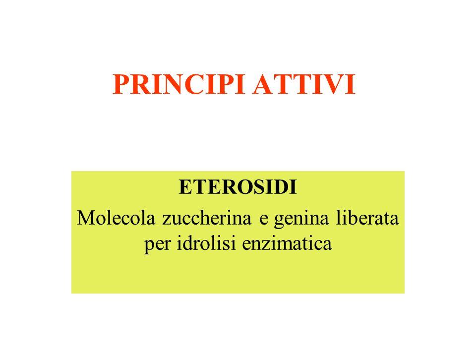 PRINCIPI ATTIVI ETEROSIDI Molecola zuccherina e genina liberata per idrolisi enzimatica