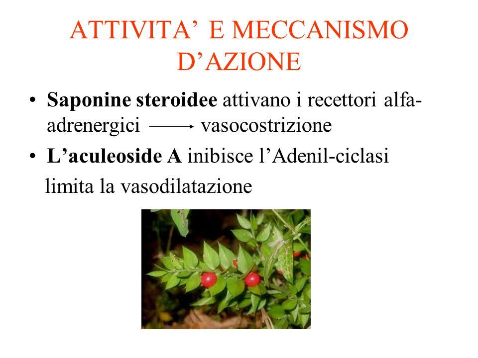 ATTIVITA E MECCANISMO DAZIONE Saponine steroidee attivano i recettori alfa- adrenergici vasocostrizione Laculeoside A inibisce lAdenil-ciclasi limita la vasodilatazione