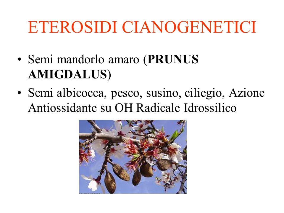 ETEROSIDI CIANOGENETICI Semi mandorlo amaro (PRUNUS AMIGDALUS) Semi albicocca, pesco, susino, ciliegio, Azione Antiossidante su OH Radicale Idrossilico