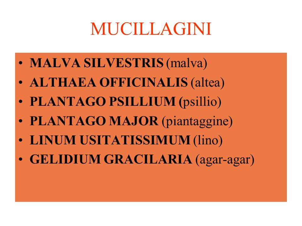 MUCILLAGINI MALVA SILVESTRIS (malva) ALTHAEA OFFICINALIS (altea) PLANTAGO PSILLIUM (psillio) PLANTAGO MAJOR (piantaggine) LINUM USITATISSIMUM (lino) GELIDIUM GRACILARIA (agar-agar)