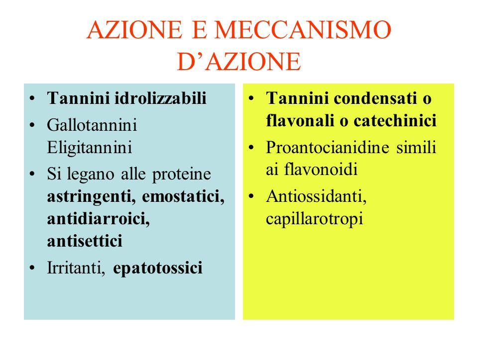 AZIONE E MECCANISMO DAZIONE Tannini idrolizzabili Gallotannini Eligitannini Si legano alle proteine astringenti, emostatici, antidiarroici, antisettici Irritanti, epatotossici Tannini condensati o flavonali o catechinici Proantocianidine simili ai flavonoidi Antiossidanti, capillarotropi