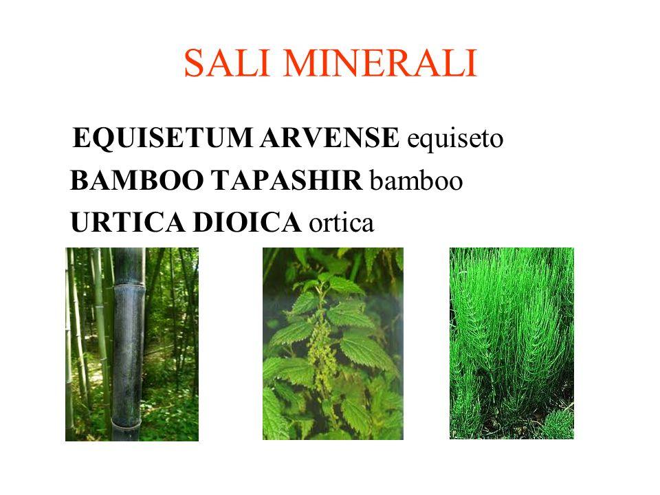 SALI MINERALI EQUISETUM ARVENSE equiseto BAMBOO TAPASHIR bamboo URTICA DIOICA ortica