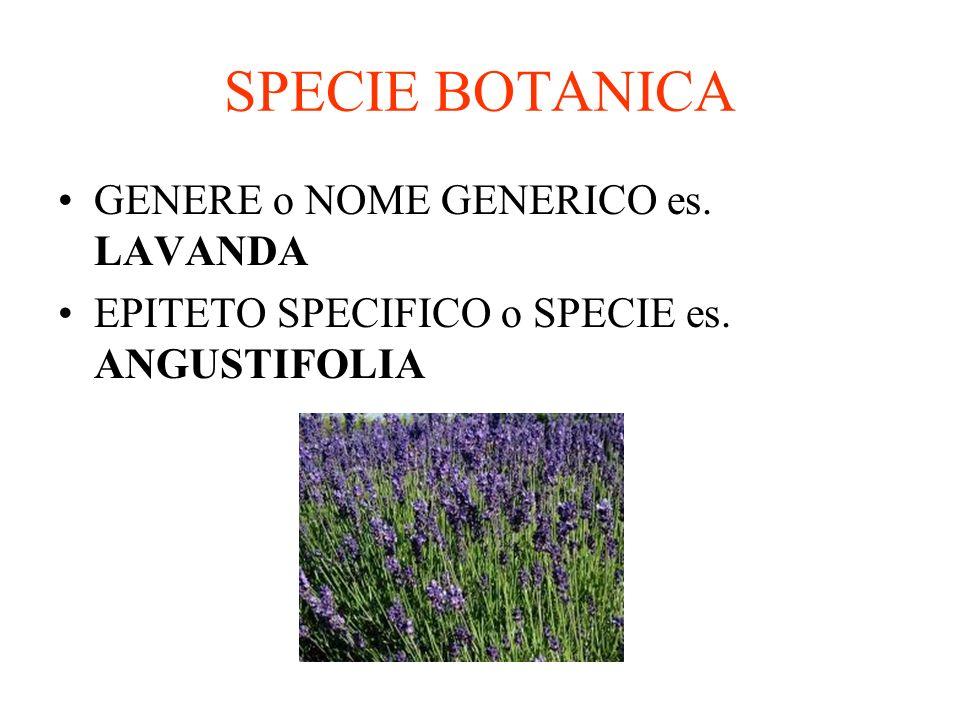 SPECIE BOTANICA GENERE o NOME GENERICO es. LAVANDA EPITETO SPECIFICO o SPECIE es. ANGUSTIFOLIA