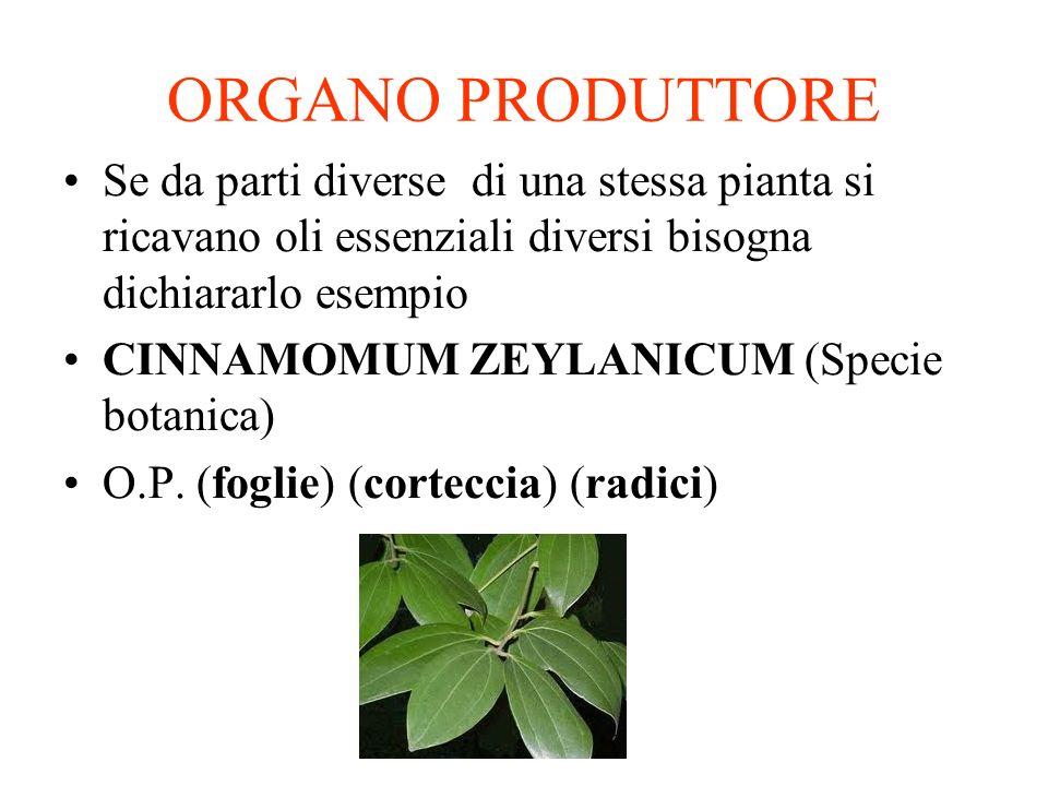 ORGANO PRODUTTORE Se da parti diverse di una stessa pianta si ricavano oli essenziali diversi bisogna dichiararlo esempio CINNAMOMUM ZEYLANICUM (Specie botanica) O.P.