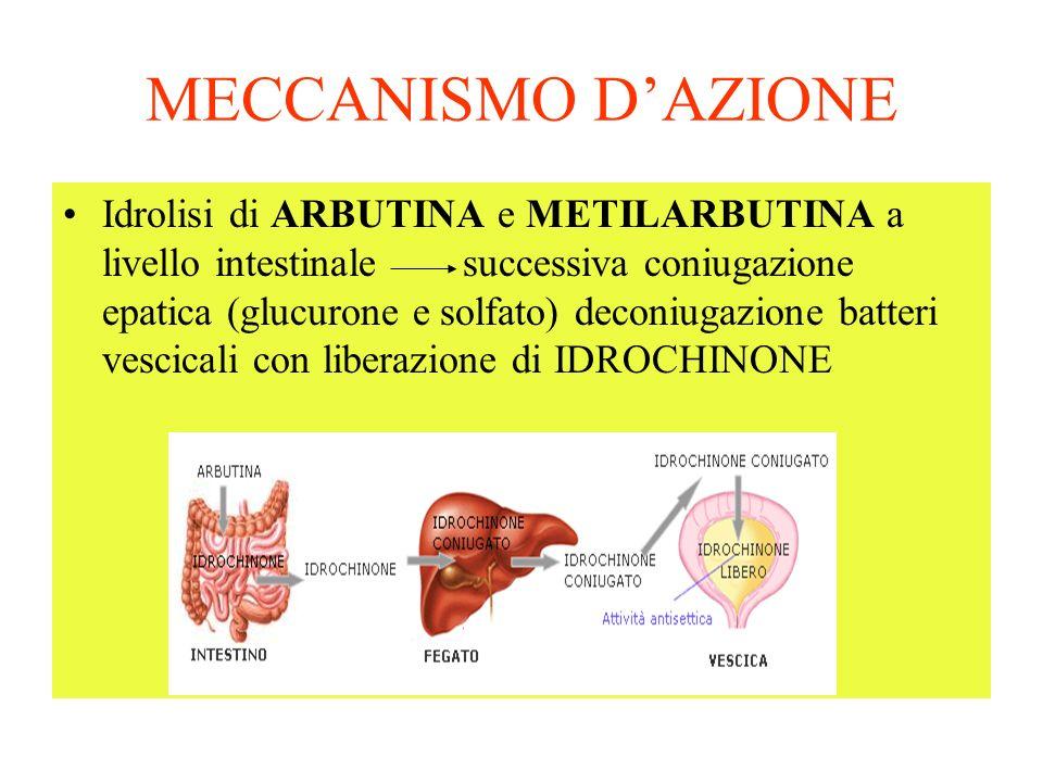 MECCANISMO DAZIONE Idrolisi di ARBUTINA e METILARBUTINA a livello intestinale successiva coniugazione epatica (glucurone e solfato) deconiugazione batteri vescicali con liberazione di IDROCHINONE