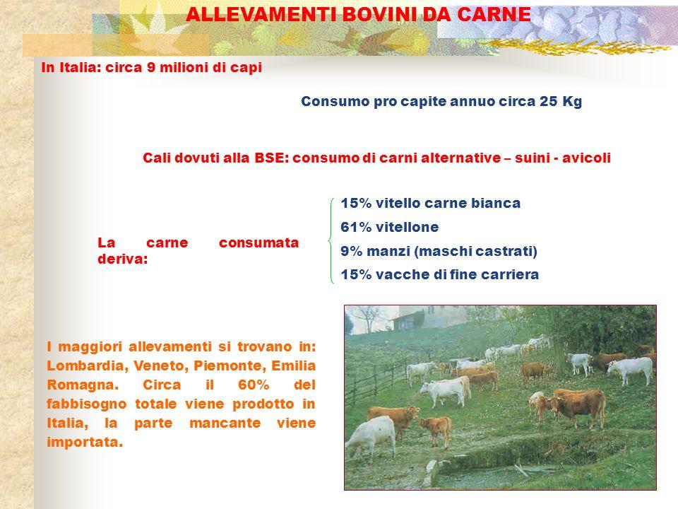 ALLEVAMENTI BOVINI DA CARNE In Italia: circa 9 milioni di capi Consumo pro capite annuo circa 25 Kg Cali dovuti alla BSE: consumo di carni alternative
