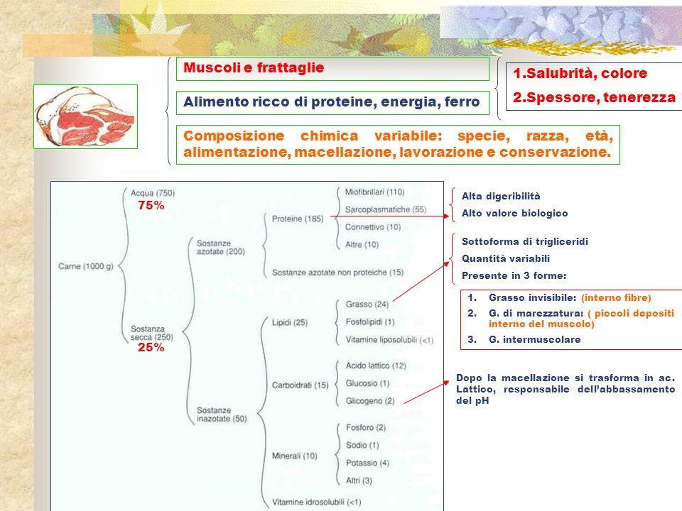 Muscoli e frattaglie Alimento ricco di proteine, energia, ferro Composizione chimica variabile: specie, razza, età, alimentazione, macellazione, lavor