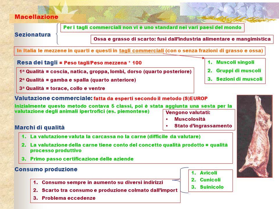 Macellazione Sezionatura In Italia le mezzene in quarti e questi in tagli commerciali (con o senza frazioni di grasso e ossa) Per i tagli commerciali