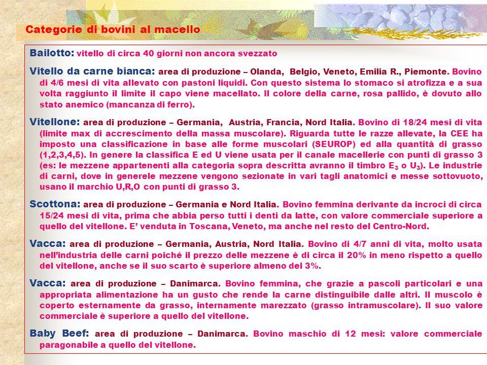 Bailotto: vitello di circa 40 giorni non ancora svezzato Vitello da carne bianca: area di produzione – Olanda, Belgio, Veneto, Emilia R., Piemonte. Bo