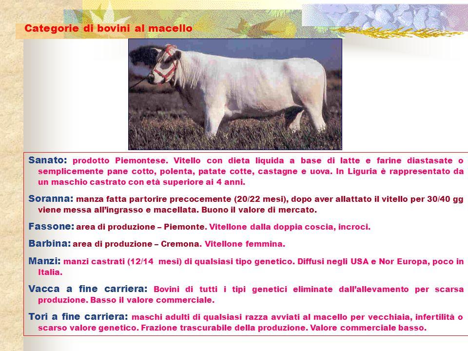 Sanato: prodotto Piemontese. Vitello con dieta liquida a base di latte e farine diastasate o semplicemente pane cotto, polenta, patate cotte, castagne