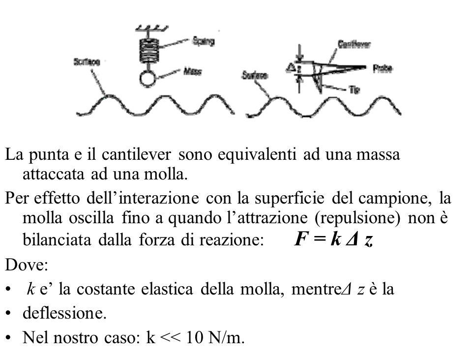 La punta e il cantilever sono equivalenti ad una massa attaccata ad una molla. Per effetto dellinterazione con la superficie del campione, la molla os