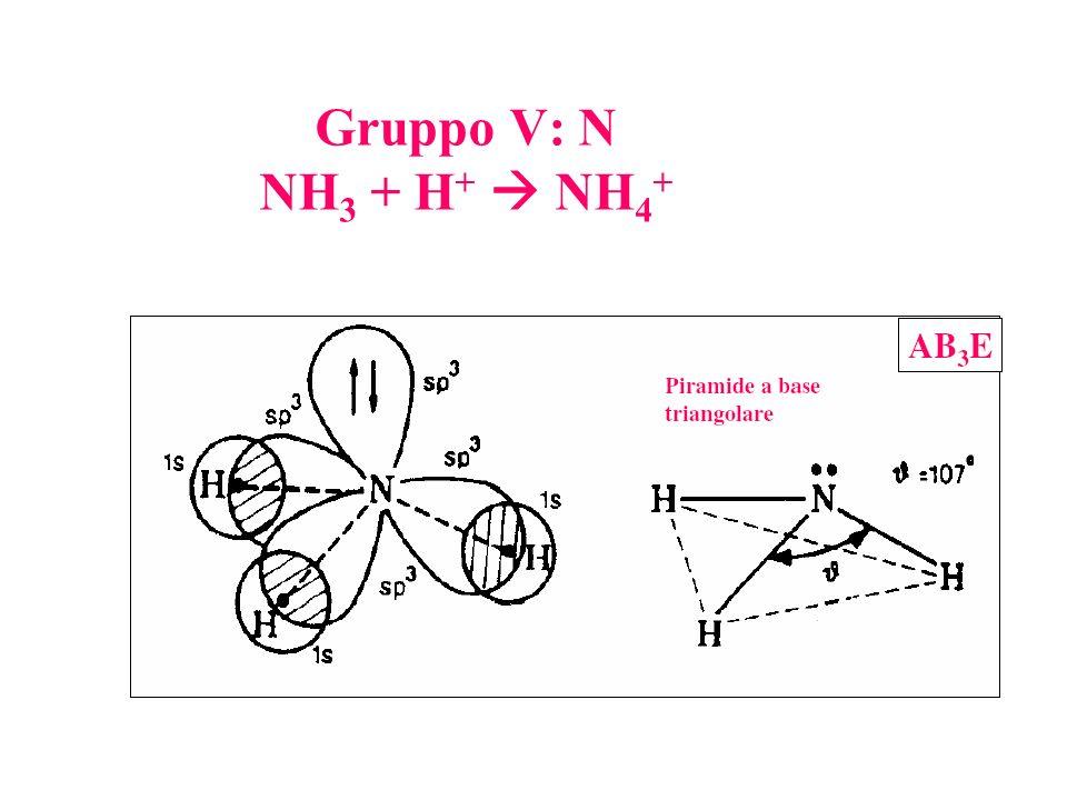 Gruppo V: N NH 3 + H + NH 4 +