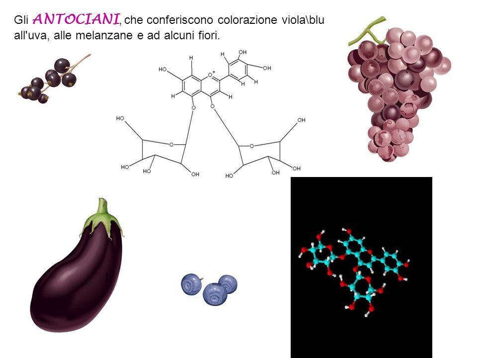 Fra i più importanti pigmenti alimentari ricordiamo: Le CLOROFILLE, che conferiscono il caratteristico colore verde alle foglie e agli ortaggi I CAROT