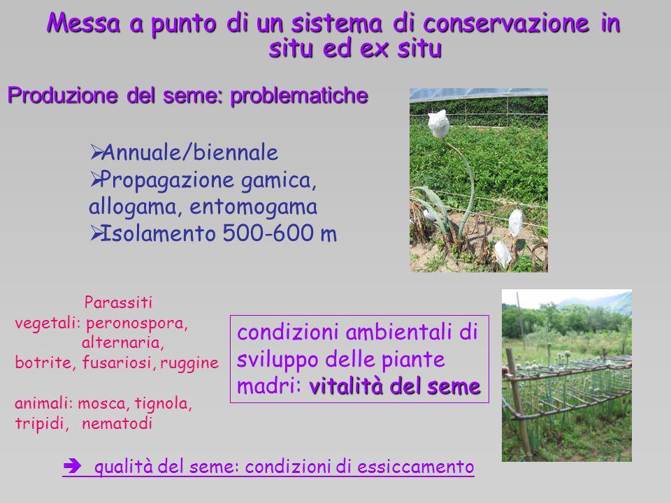 Messa a punto di un sistema di conservazione in situ ed ex situ Produzione del seme: problematiche vitalità del seme condizioni ambientali di sviluppo