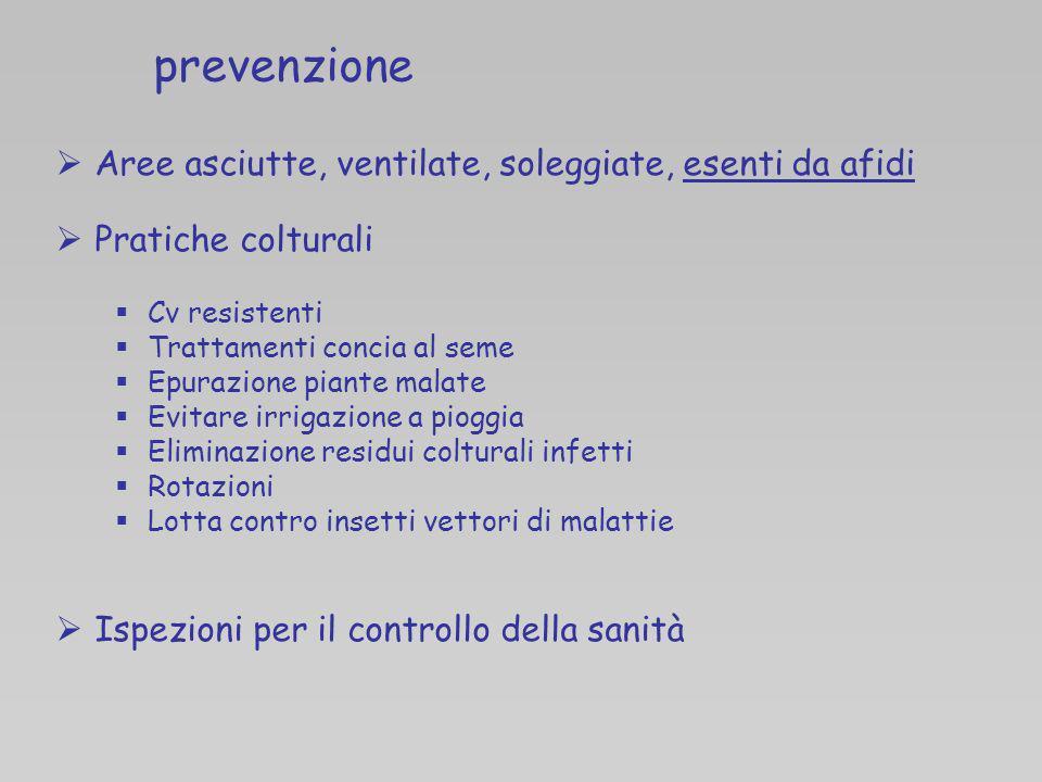 prevenzione Aree asciutte, ventilate, soleggiate, esenti da afidi Pratiche colturali Cv resistenti Trattamenti concia al seme Epurazione piante malate