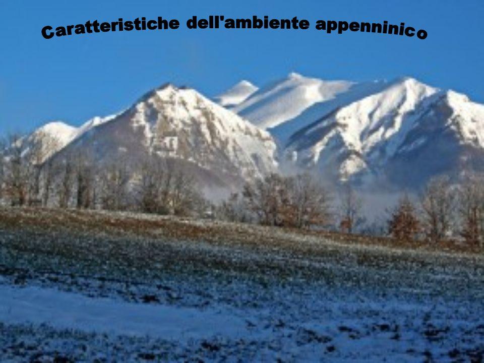 Paesaggi del Parco Nazionale dellAspromonte