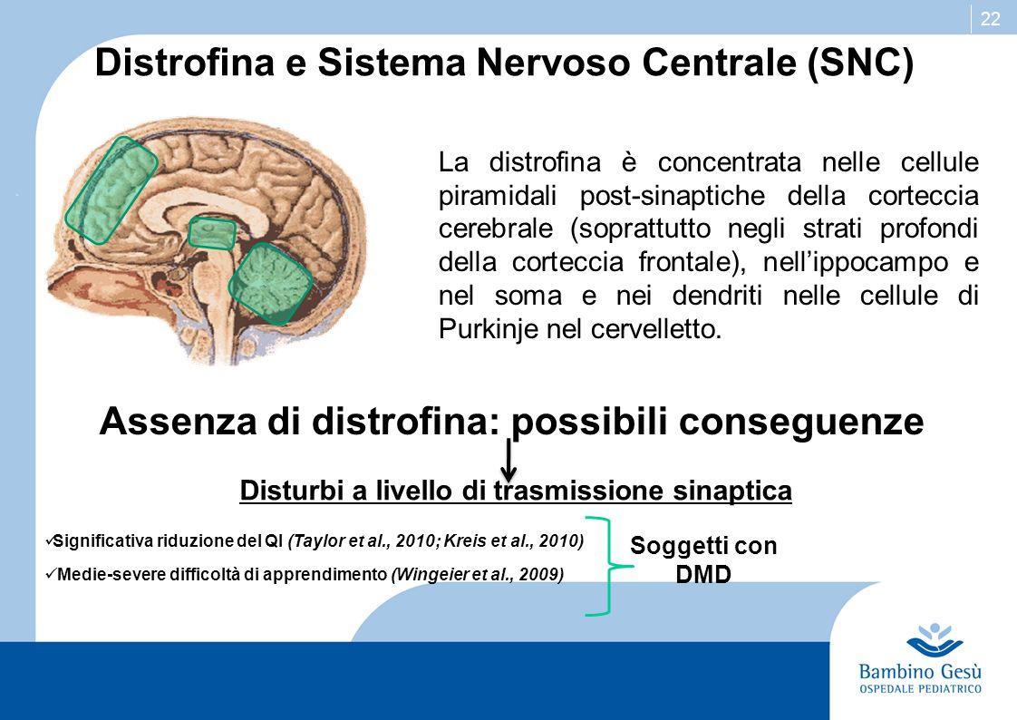 22 Distrofina e Sistema Nervoso Centrale (SNC) La distrofina è concentrata nelle cellule piramidali post-sinaptiche della corteccia cerebrale (sopratt