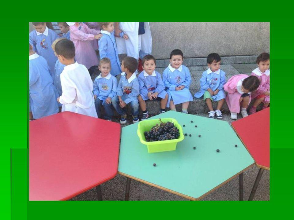 Ai bambini abbiamo fatto tirare su le maniche dei grembiulini per poter schiacciare l´uva con le mani facendo vedere loro il succo che ne usciva.