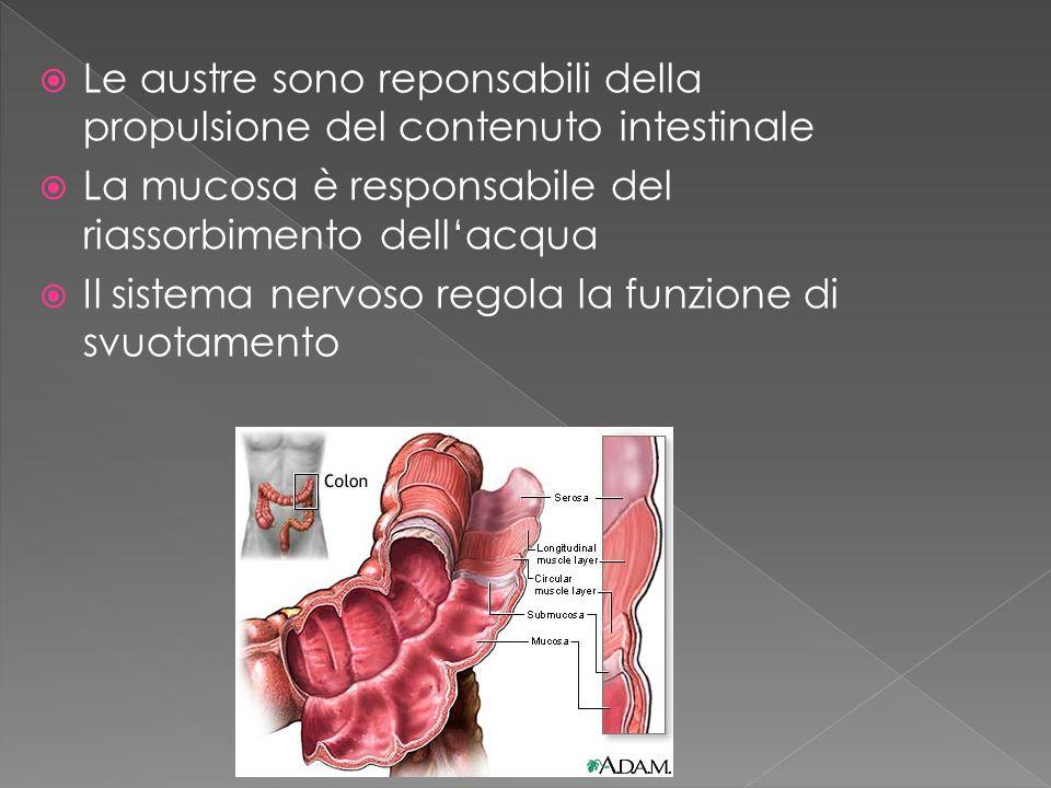 Le austre sono reponsabili della propulsione del contenuto intestinale La mucosa è responsabile del riassorbimento dellacqua Il sistema nervoso regola