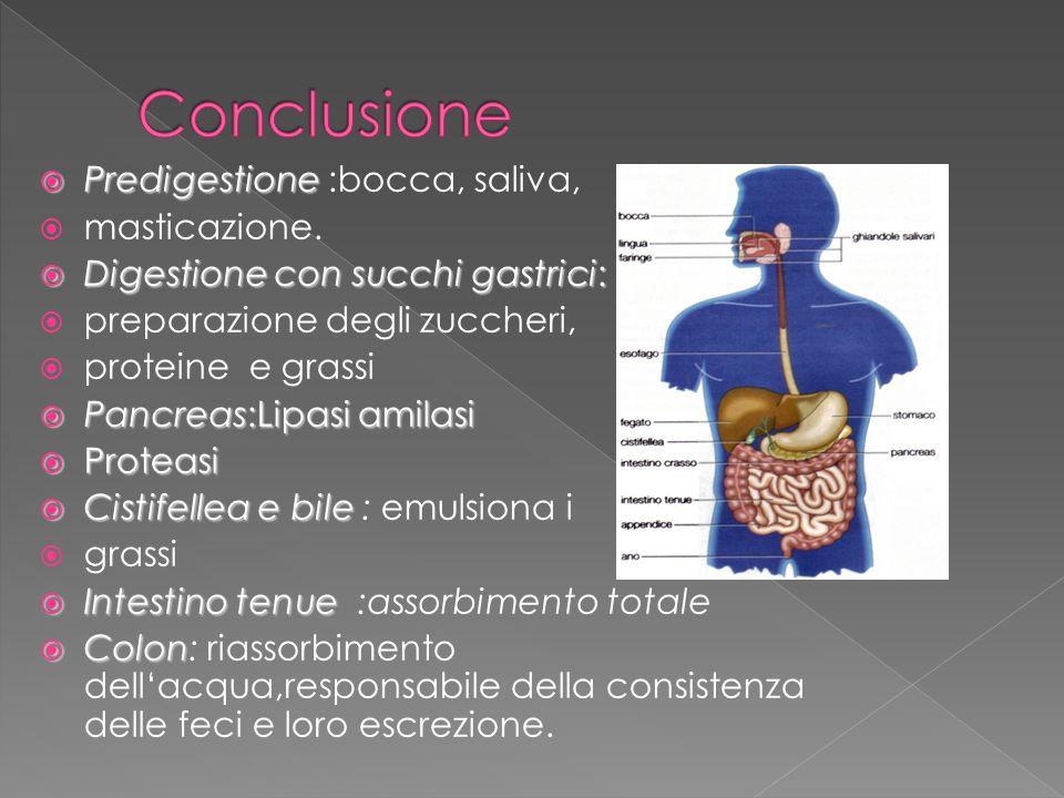 Predigestione Predigestione :bocca, saliva, masticazione. Digestione con succhi gastrici: Digestione con succhi gastrici: preparazione degli zuccheri,