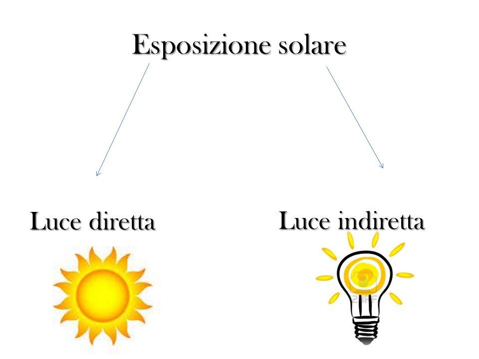 Esposizione solare Luce diretta Luce indiretta