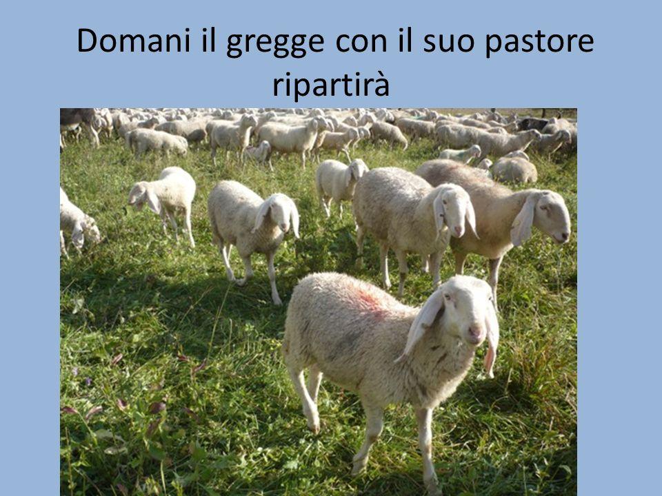 Domani il gregge con il suo pastore ripartirà