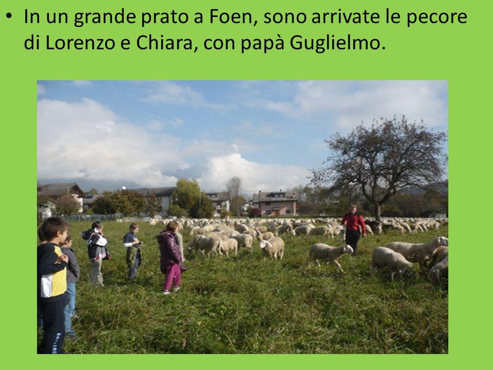 In un grande prato a Foen, sono arrivate le pecore di Lorenzo e Chiara, con papà Guglielmo.