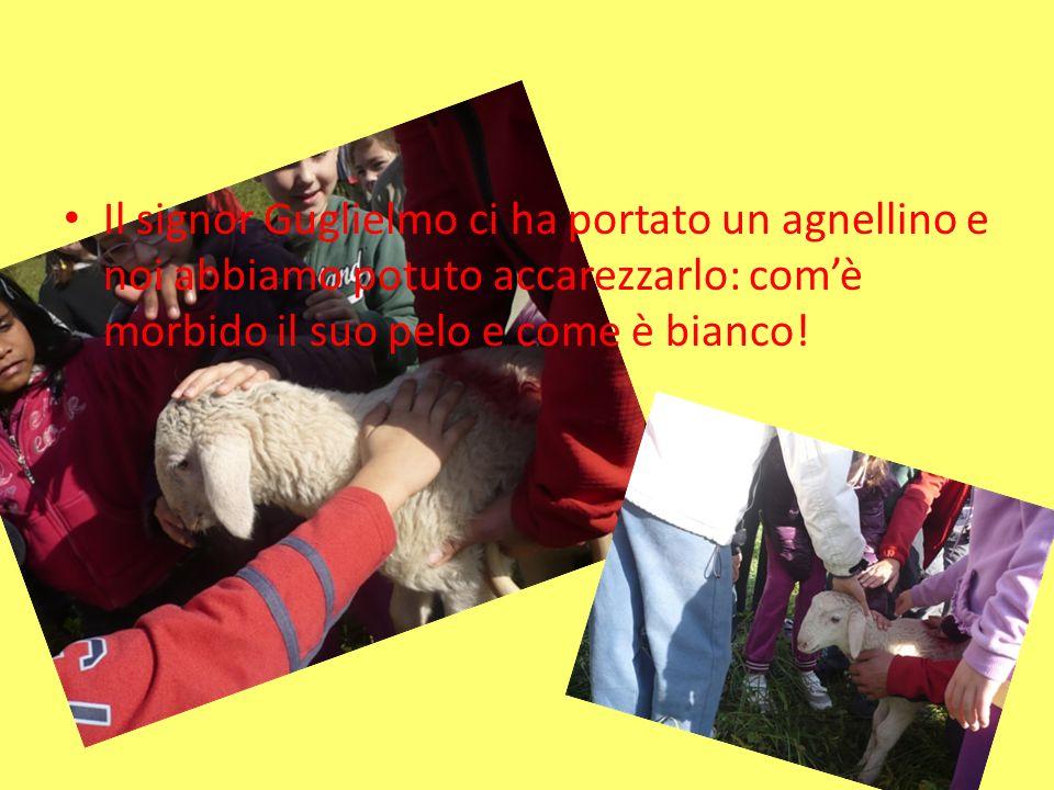 Il signor Guglielmo ci ha portato un agnellino e noi abbiamo potuto accarezzarlo: comè morbido il suo pelo e come è bianco!