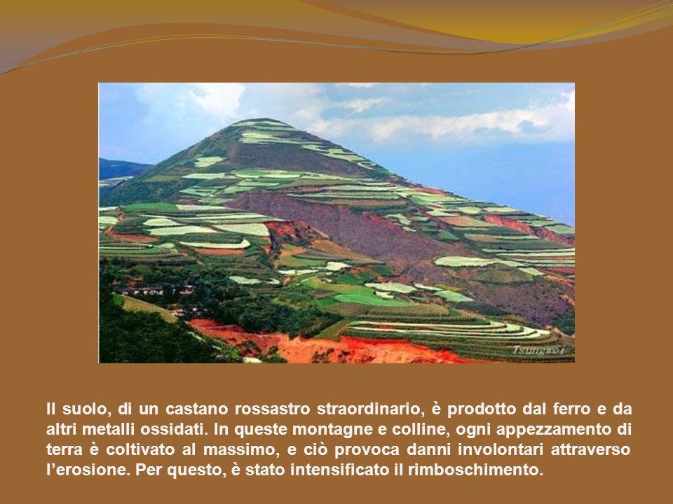 Il suolo, di un castano rossastro straordinario, è prodotto dal ferro e da altri metalli ossidati.