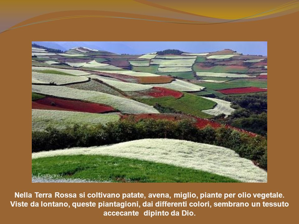 Nella Terra Rossa si coltivano patate, avena, miglio, piante per olio vegetale.