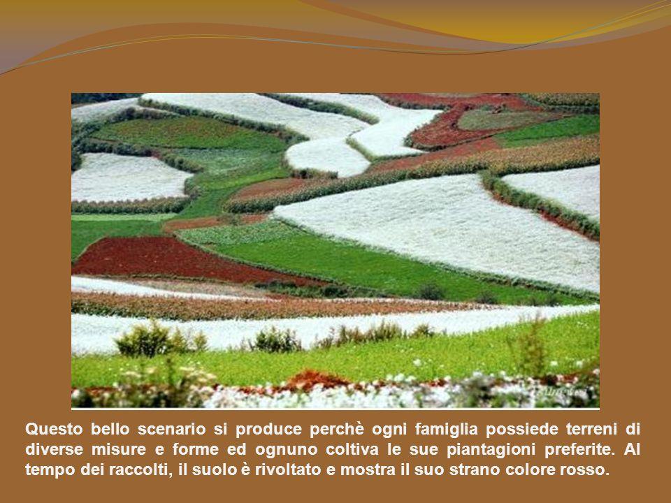 Nella Terra Rossa si coltivano patate, avena, miglio, piante per olio vegetale. Viste da lontano, queste piantagioni, dai differenti colori, sembrano