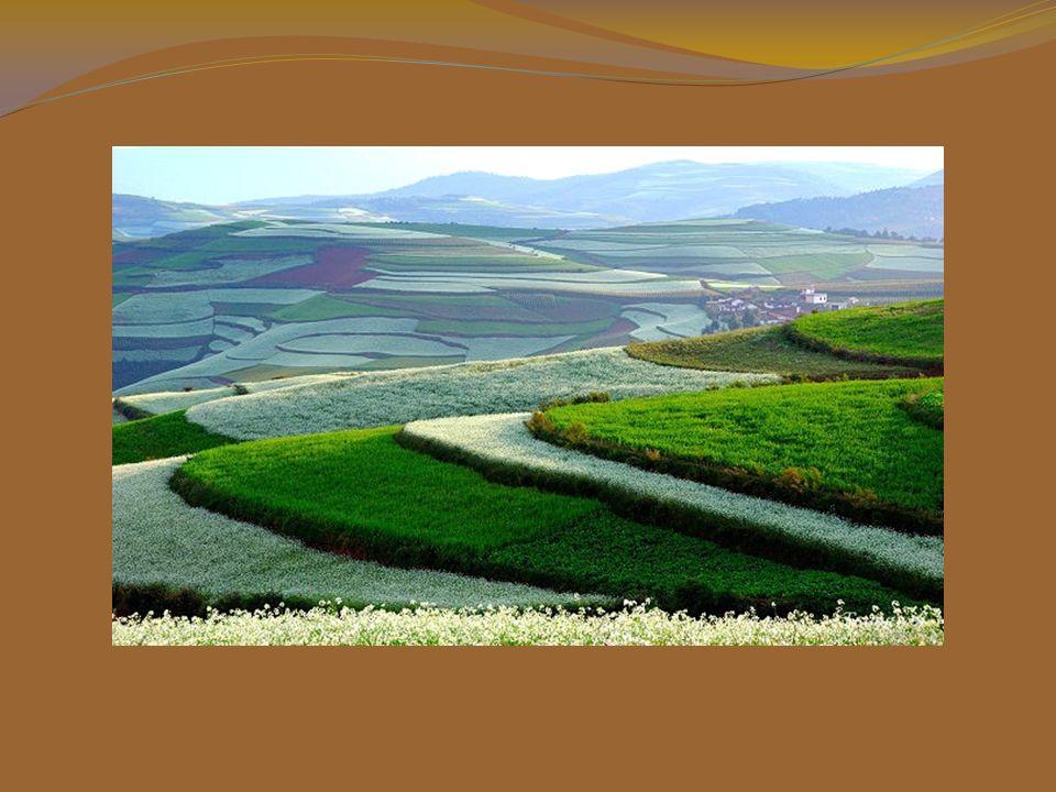 Questo bello scenario si produce perchè ogni famiglia possiede terreni di diverse misure e forme ed ognuno coltiva le sue piantagioni preferite. Al te