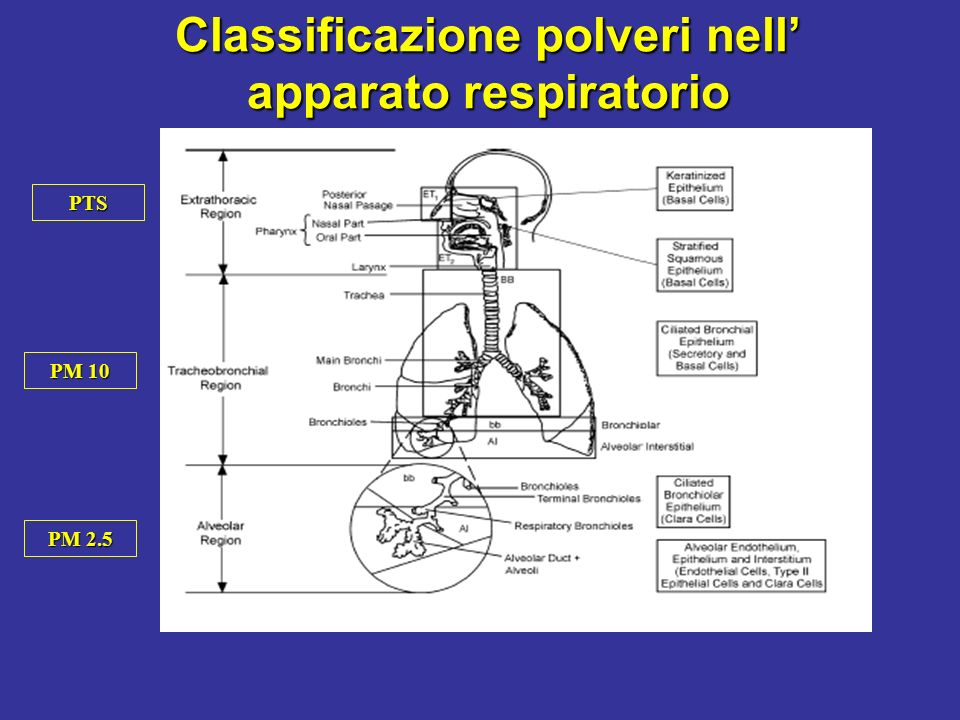 Classificazione polveri nell apparato respiratorio PTS PM 10 PM 2.5