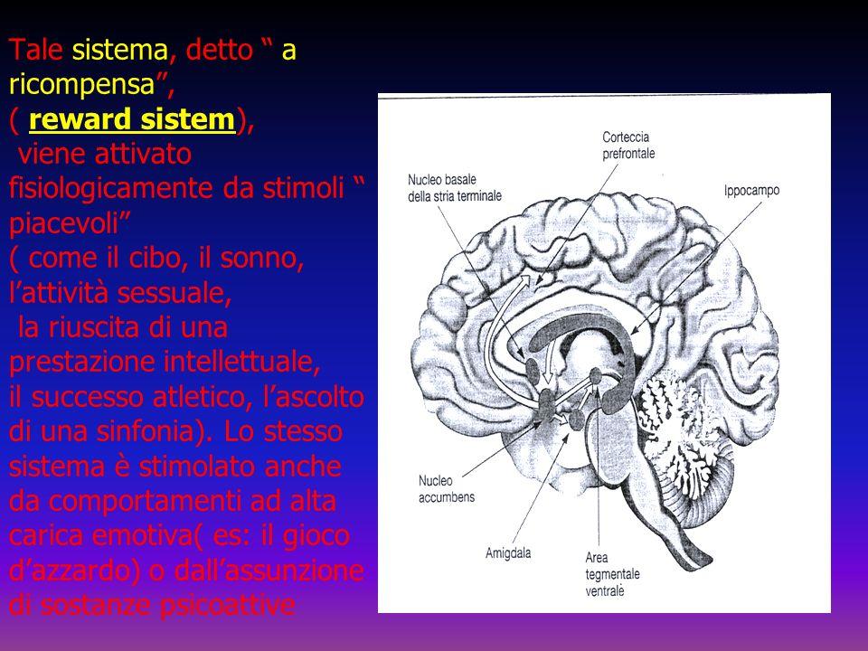 Tale sistema, detto a ricompensa, ( reward sistem), viene attivato fisiologicamente da stimoli piacevoli ( come il cibo, il sonno, lattività sessuale,