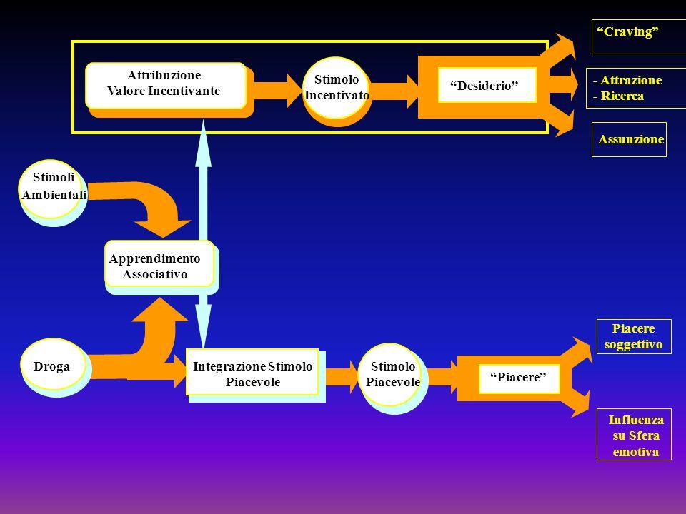 Stimoli Ambientali Droga Apprendimento Associativo Integrazione Stimolo Piacevole Stimolo Incentivato Attribuzione Valore Incentivante Stimolo Piacevo