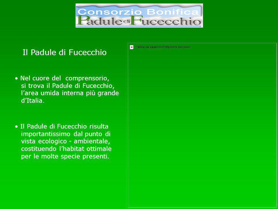 Il Padule di Fucecchio Nel cuore del comprensorio, si trova il Padule di Fucecchio, larea umida interna più grande dItalia.