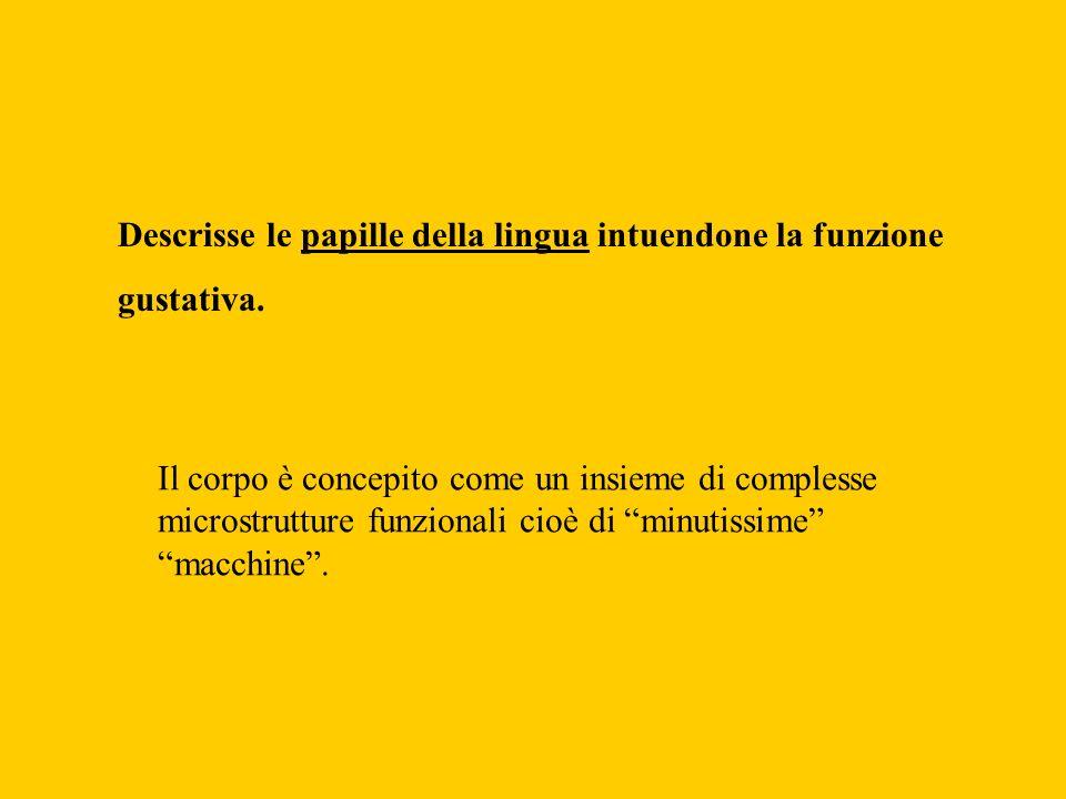 Descrisse le papille della lingua intuendone la funzione gustativa. Il corpo è concepito come un insieme di complesse microstrutture funzionali cioè d