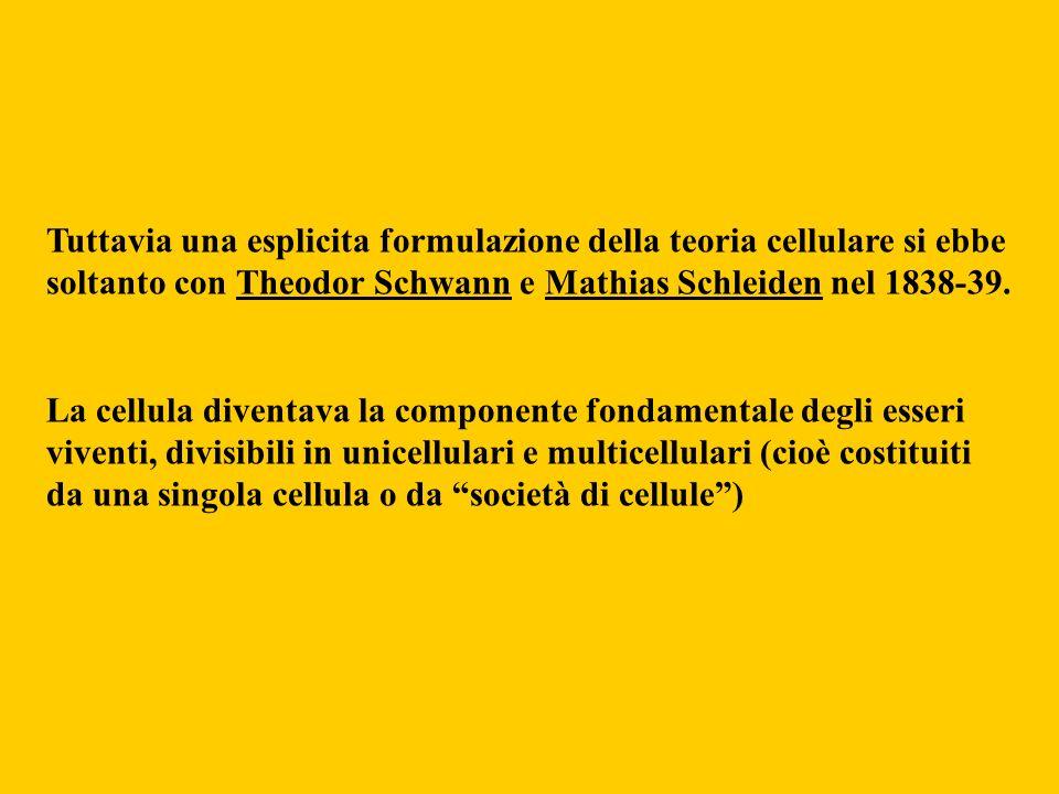 Tuttavia una esplicita formulazione della teoria cellulare si ebbe soltanto con Theodor Schwann e Mathias Schleiden nel 1838-39. La cellula diventava