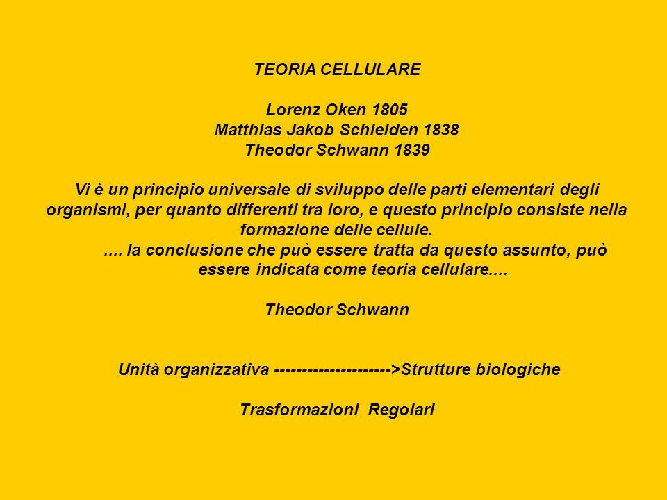 TEORIA CELLULARE Lorenz Oken 1805 Matthias Jakob Schleiden 1838 Theodor Schwann 1839 Vi è un principio universale di sviluppo delle parti elementari d