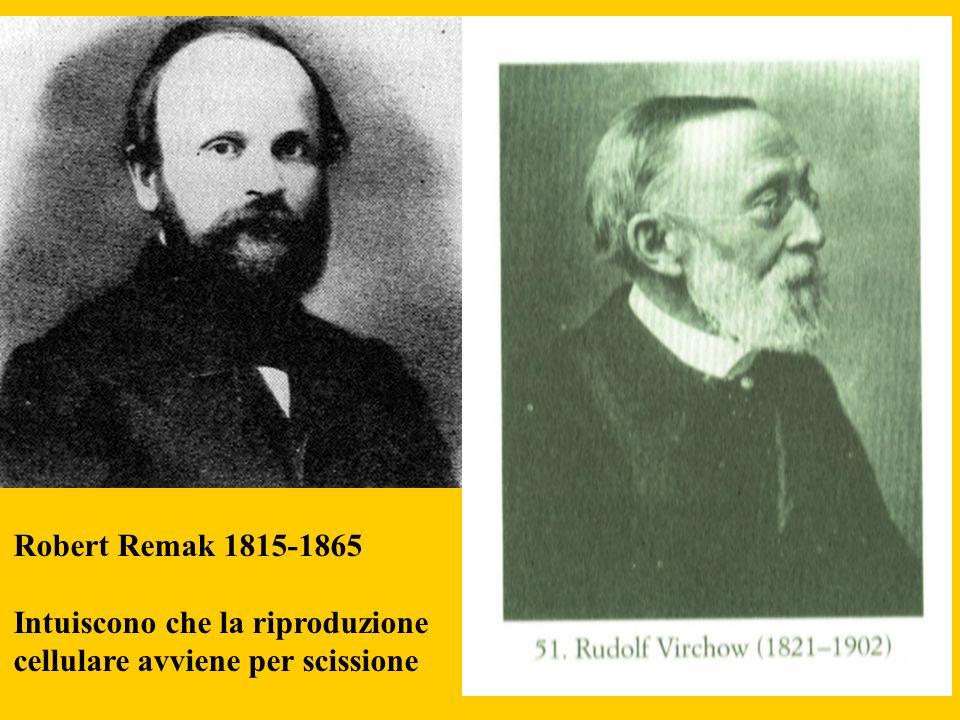 Robert Remak 1815-1865 Intuiscono che la riproduzione cellulare avviene per scissione