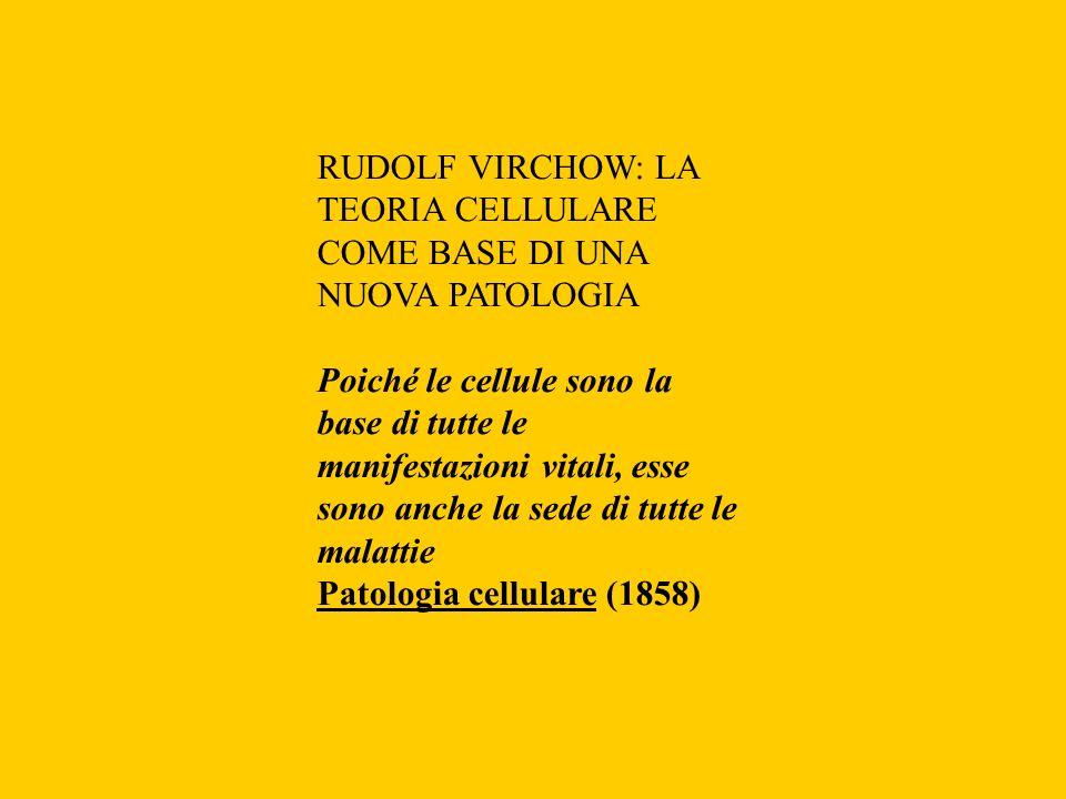 RUDOLF VIRCHOW: LA TEORIA CELLULARE COME BASE DI UNA NUOVA PATOLOGIA Poiché le cellule sono la base di tutte le manifestazioni vitali, esse sono anche