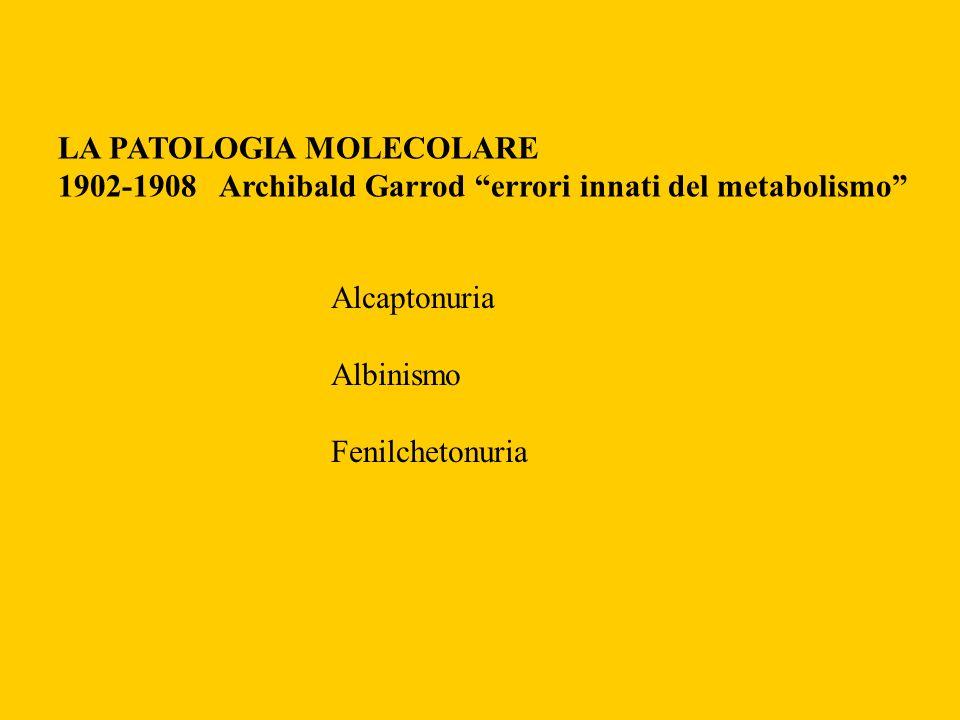 LA PATOLOGIA MOLECOLARE 1902-1908 Archibald Garrod errori innati del metabolismo Alcaptonuria Albinismo Fenilchetonuria