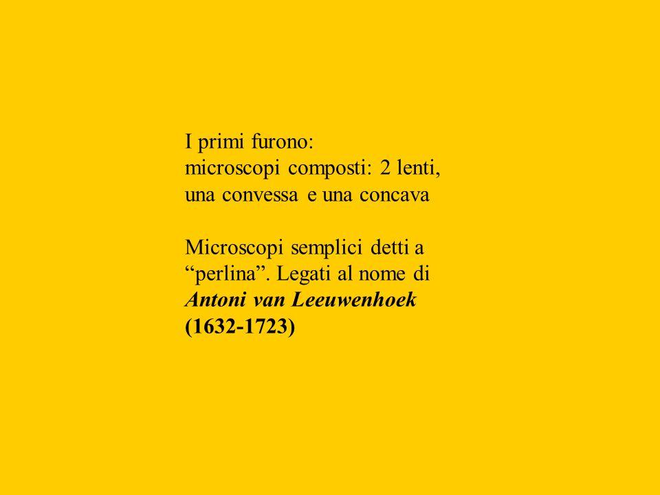 I primi furono: microscopi composti: 2 lenti, una convessa e una concava Microscopi semplici detti a perlina. Legati al nome di Antoni van Leeuwenhoek