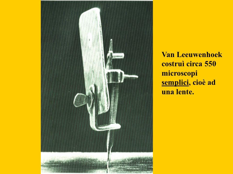 Van Leeuwenhoek costruì circa 550 microscopi semplici, cioè ad una lente.