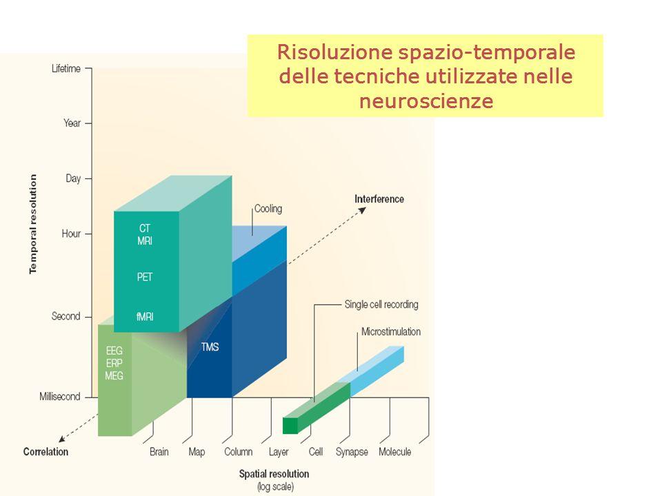 Risoluzione spazio-temporale delle tecniche utilizzate nelle neuroscienze
