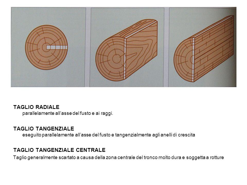 TAGLIO RADIALE parallelamente allasse del fusto e ai raggi. TAGLIO TANGENZIALE eseguito parallelamente allasse del fusto e tangenzialmente agli anelli