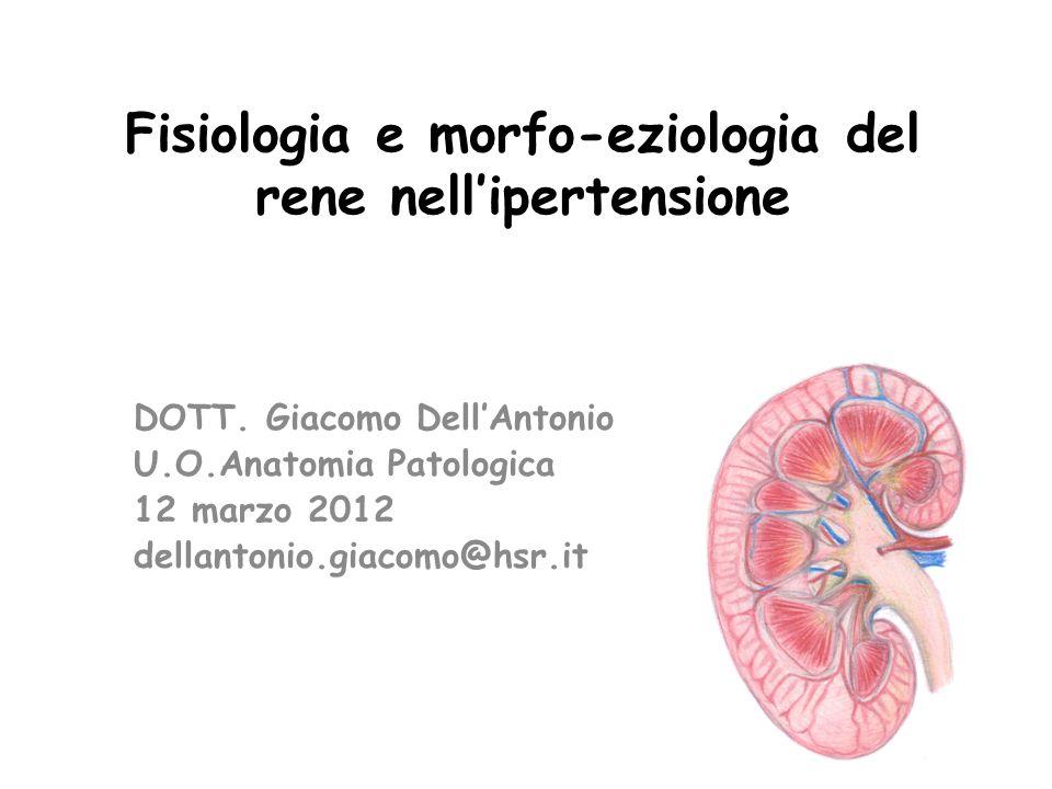 Fisiologia e morfo-eziologia del rene nellipertensione DOTT.