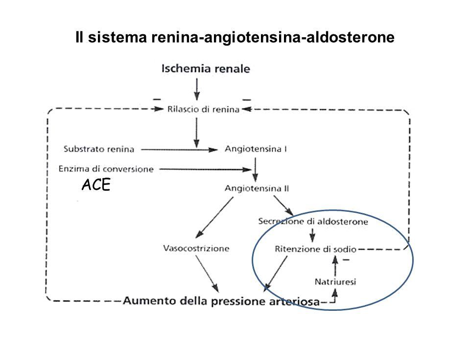 Il sistema renina-angiotensina-aldosterone ACE